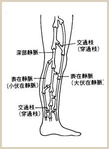 横から見た足の図