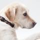 身体障害者補助犬の受け入れについて